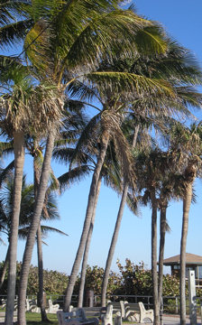 palm-trees1