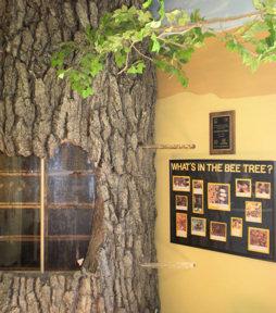 rma-bee-tree1