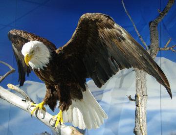 rma-eagle