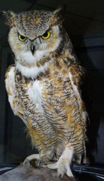 rma-owl