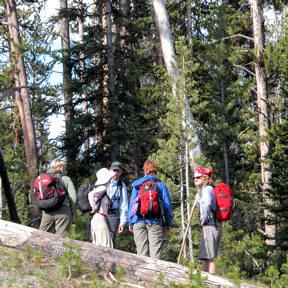 ynp-hikers