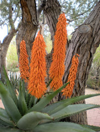 asdm-orange-spikes