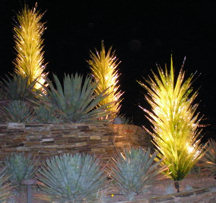 glass-yuccas-night-r