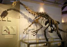 mna-dinosaur