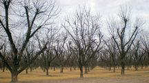 stahmanns-orchard