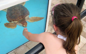 loggerhead-marinelife-center-jonah-and-jasmine