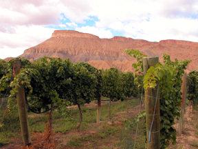 vineyard-and-mt-garfield