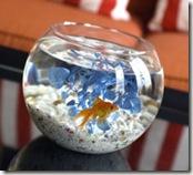 Hotel Monaco - Goldfish