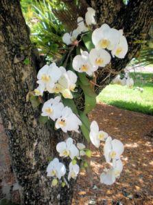 Orchids - 72