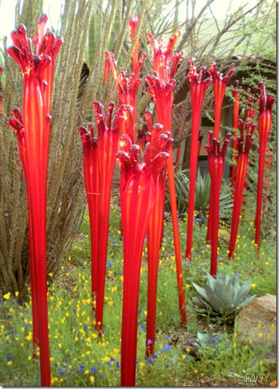 Red Stems in Courtyard - Front Page