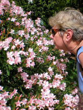 Scents of Oleander