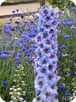 Blue Flowers = Fort Vancouver