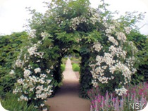 Rose Arbor - Fort Vancouver