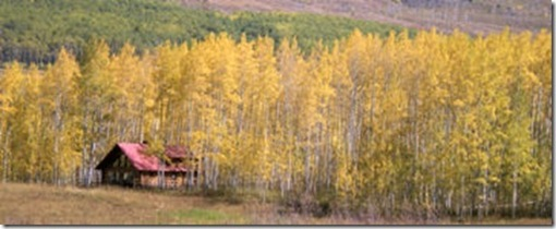 Aspen Around Cabin - Gothic Road