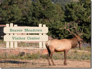 Elk with Sign