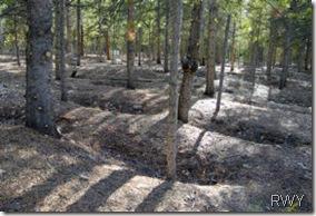 Leadville Sunken Graves
