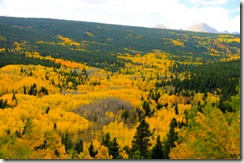 Peak to Peak Aspens