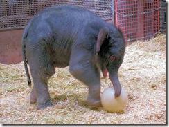 Baby Elephant - Rio Grande Zoo
