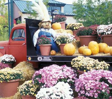 Rio Grande Botanic Garden - Truck