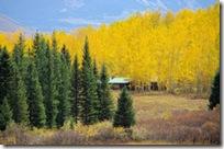 Golden Aspen