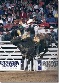 bullrider5