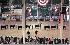 NWSS - Cattle Show3