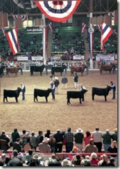 NWSS - Cattle Show