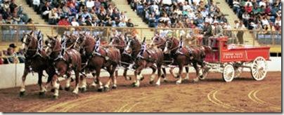 NWSS - Draft Horses