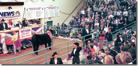 NWSS - Junior Auction