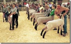 NWSS- Lamb Judging