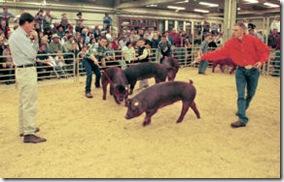 NWSS - Swine2