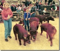 NWSS - Swine