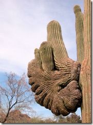 Cactus Fan