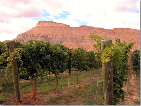 Mt. Garfield and Vineyard - A2010