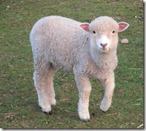 Flaming Lamb