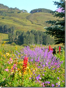CB Mountains with Wildflowers