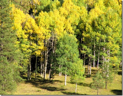 Bright Aspen - West of Angel Fire - B