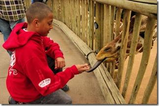 Giraffe Tongue - Red Shirt - B