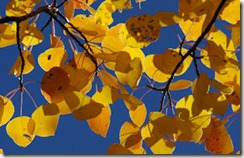 Gold Leaves - B