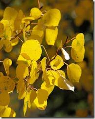 Leaves Closeup - B