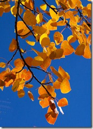 Oranage Leaves - B