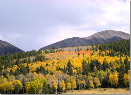 Aspen on LaVeta Pass - B