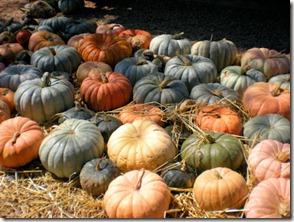 Golondrinas Pumpkins - B