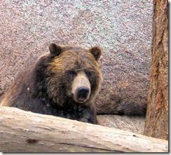 Bear - A - B