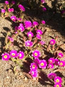 DBG - Blooms