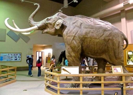 Mammoth Site 1