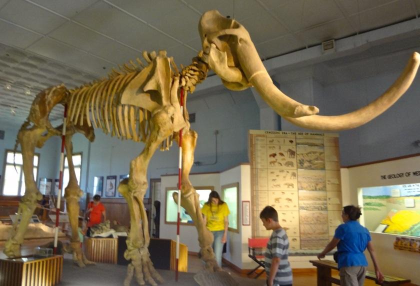 Trailside Mammoth - N