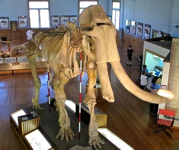 Trailsize Mammoth