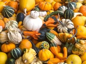 Okanagan Gourds