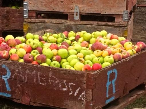 Parsons - Apples